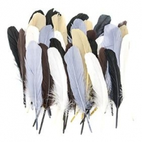 LITTLE FEATHER TURKEY QUILLS ANIMAL 50 PC - Click for more info