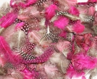 FEATHERS EXOTIC PRETTY 25 GM - Click for more info