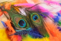Fabulous Feathers