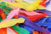 FEATHERS INDIAN QUILL PLAIN 50 PC - Click for more info