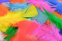 FEATHERS TURKEY MULTI 250 PC - Click for more info