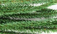 PINE STEMS 50 PC* - Click for more info